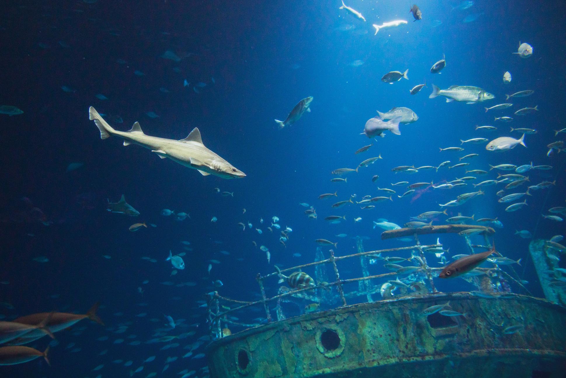 öffnungszeiten Ozeaneum